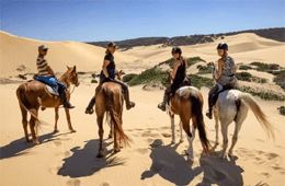 Beachcomber Horse Trails